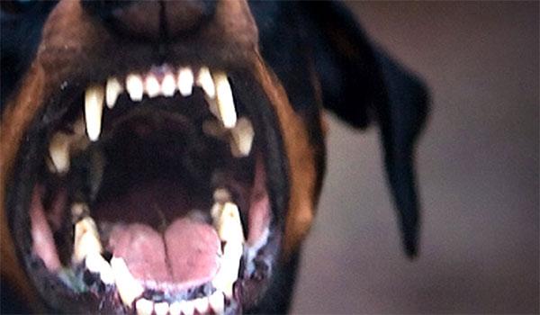 Τραγωδία στα Γλυκά Νερά: Νεκρό βρέφος από επίθεση σκύλου