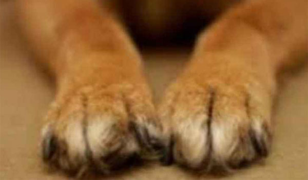 Σκύλος έκανε ζημιά και παρίστανε τον πεθαμένο για να γλυτώσει!