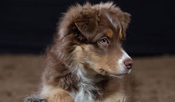 Αμοιβή 11.000 ευρώ για εξαφανισμένο σκύλο