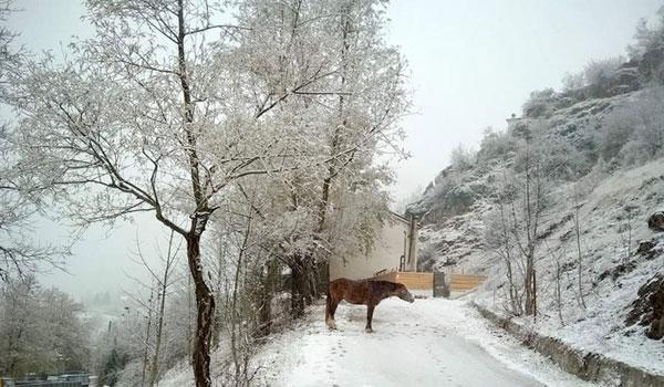 Τα πρώτα χιόνια έπεσαν στα Τρίκαλα!