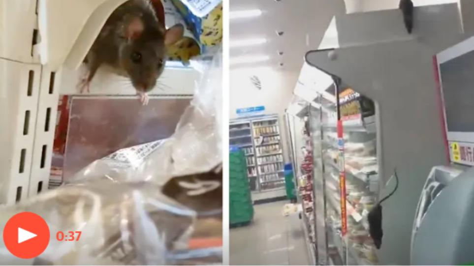 Ποντίκια γέμισαν τα ράφια σε ιαπωνικό σούπερ μάρκετ και έγιναν viral