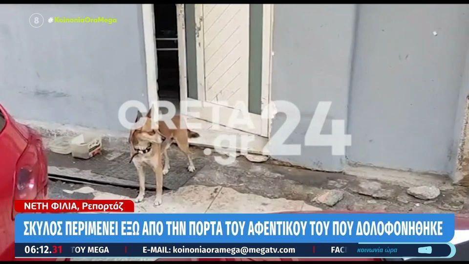 """Ο """"Χάτσικο"""" της Ναυπάκτου: Σκύλος ζει δίπλα στο εικόνισμα του νεκρού αφεντικού του"""