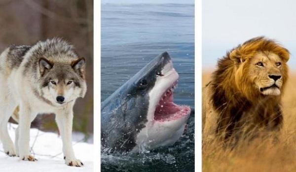 Αυτό το ζώο σκοτώνει 725.000 ανθρώπους κάθε χρόνο